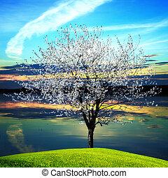 boompje, bloeien, ondergaande zon