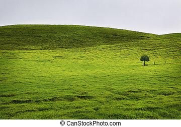 boompje, eenzaam, groen veld, hawaii
