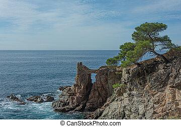 boompje, eenzaam, zee, berghelling, oever, rotsachtig, seascape.