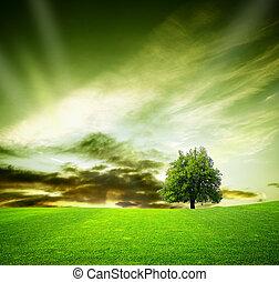 boompje, eik, zonsondergang veld