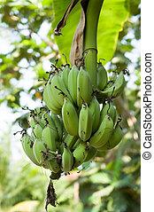 boompje, groene, jonge, banaan