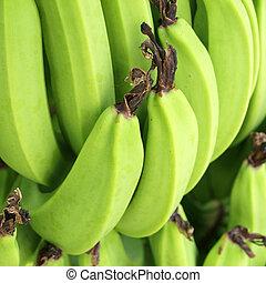 boompje, groene, thailand., bananen