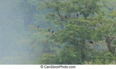 boompje, nationaal park, vogels, iguazu