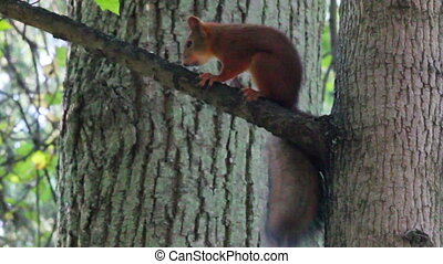 boompje, park, squirrel
