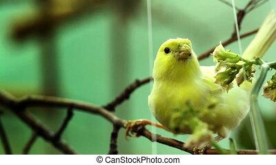 boompje, vogel