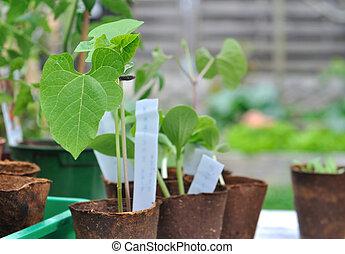 boon, seedlings, buiten