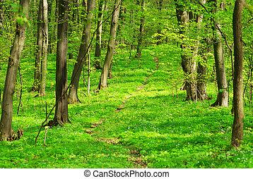 bos, achtergrond, groene