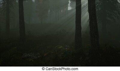 bos, morgen, herfst, mist