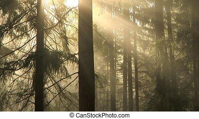 bos, morgen, wrakkigheid, tijd