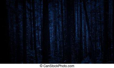 bos, voorbijgaand, sneeuwval, bomen, nacht