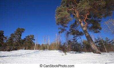 bos, winter