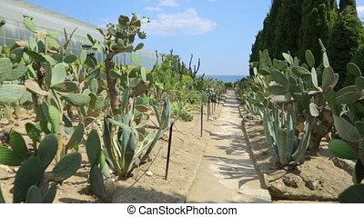 botanische tuin, cactussen