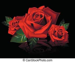 bouquetten, rozen, reflectio, rood