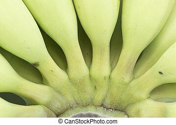 boven., afsluiten, groene, jonge, banaan