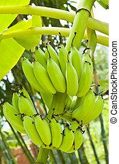 boven., afsluiten, groene, jonge, bananen