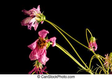 bovenleer, bloemen, closeup, sterven, links