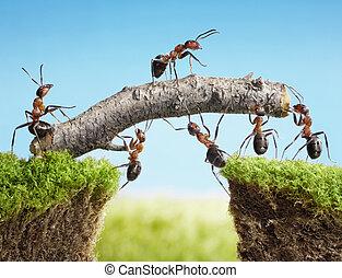 brug, teamwork, het construeren, mieren, team