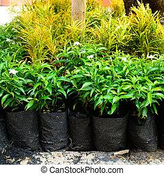buiten, jonge, planten