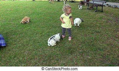 bunnies, konijnen, tuin, krullend, haren, jonge, dierentuin, hebben, tussen, plezier, meisje