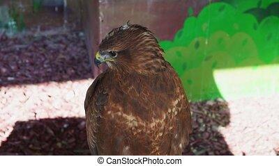 captivity., voliere, vlieger, vogels, the., prooi, zit