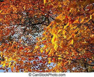 centraal, kleurrijke, bladeren, park, helder, herfst, nyc