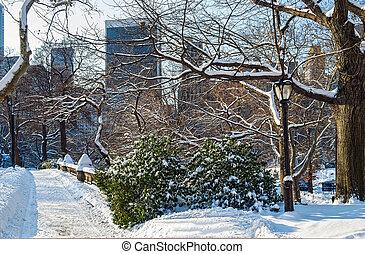 centraal park, de scène van de winter