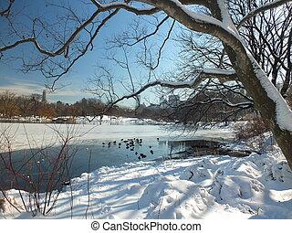 centraal, winter, -, park, meer, nyc