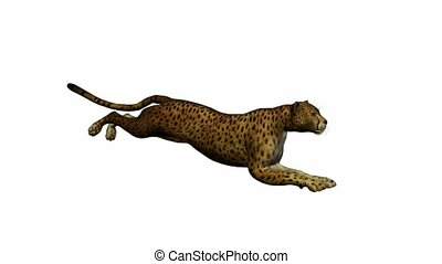 cheetah, rennende