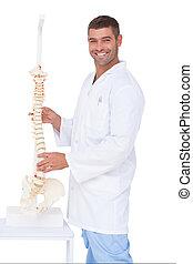 chiropractor, het tonen, fototoestel, model, ruggegraat