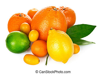 citrus, groene, fruit, blad, fris