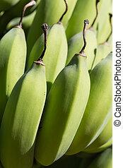 close-up, banaan, bos