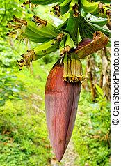 close-up, bloem, banaan