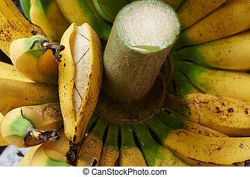 close-up, bos, banaan, rijp, aanzicht