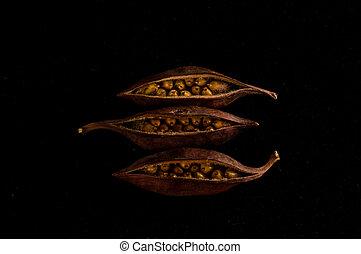 close-up, fruit, zaden