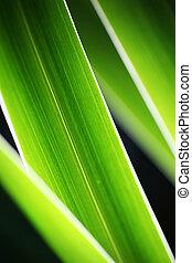 close-up, gras, groene samenvatting, achtergrond