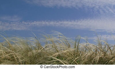 close-up, gras, wind.