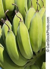 close-up, jonge, banaan, bos