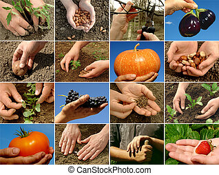 collage, landbouw