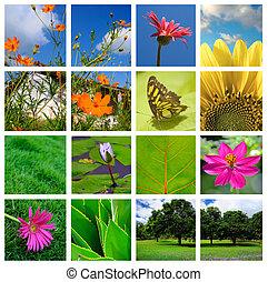 collage, lente, natuur