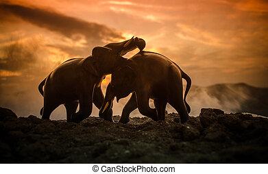 communiceren, elefant, twee, stier, werk op elkaar in, fighting., terwijl, toneelstuk