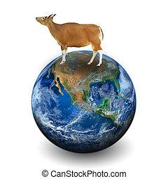 communie, koe, gemeubileerd, dit, beeld, nasa, aarde
