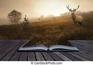 concept, beeld, hertje, creatief, hert, boek, rood, komst, nevelig, pagina's, landscape, uit