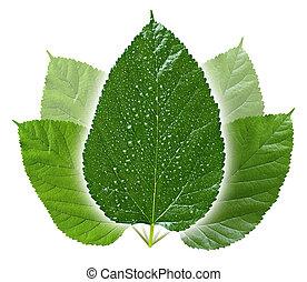 conceptueel, bladeren, groene