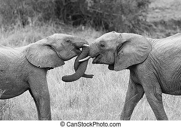 conversie, onderbroek, het krullen, twee, groeten, aandoenlijk, artistiek, elefant