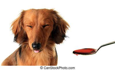 dachshund, puppy, medicine.