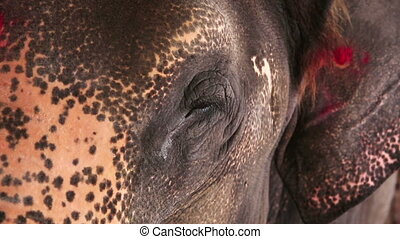 de mening van de close-up, hoofd, elefant