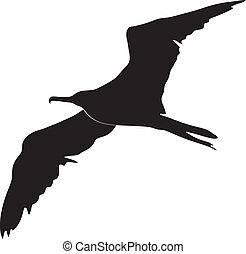 de vogel van het fregat