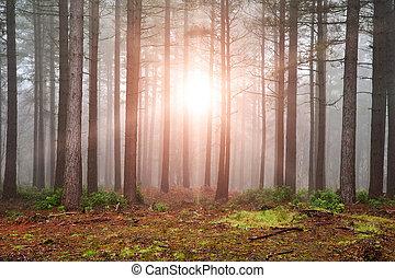 dicht, doorbraak, zon, bomen, herfst, mist, door, bos, herfst, landscape