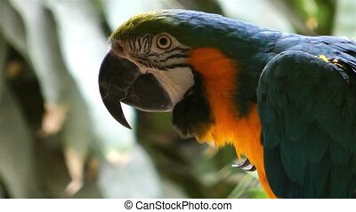 dier, kleurrijke, papegaai, vogel