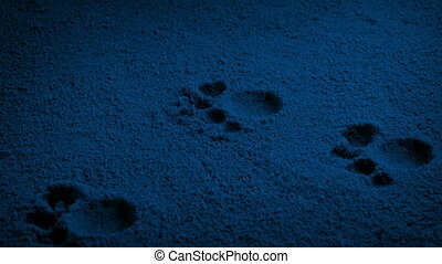 dier, nacht, voet drukt af, voorbijgaand